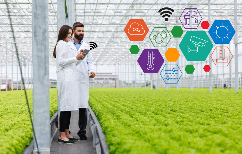 automated-control-systems-in-a-commercial-greenhouse