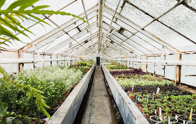 greenhouse-monitoring